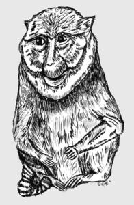 Allen's Swamp Monkey to Color