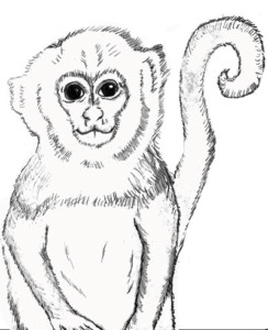 Capuchin Monkey to Color