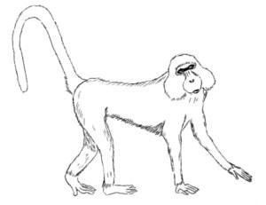 Drawing of Kipunji Monkey